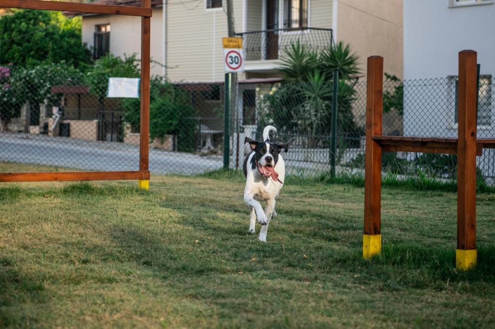 köpek_parkı_8_of_17_